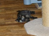 Котенок 2 мес ищет дом (девочка). Фото 3.
