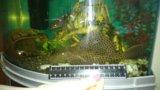 Аквариум с рыбами. Фото 1.