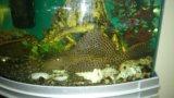 Аквариум с рыбами. Фото 3.