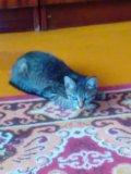 Кошечка 4 мес. Фото 2.