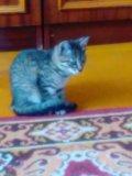 Кошечка 4 мес. Фото 3.