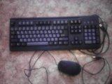 Клавиатура и мышь. Фото 1.