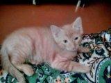 Кот 2,5 месяца. Фото 2.