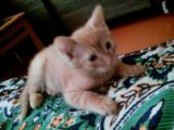 Кот 2,5 месяца. Фото 3.