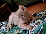 Кот 2,5 месяца. Фото 4.