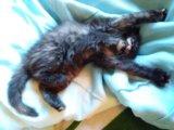 Котенок девочка. Фото 2.