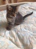 Котенок в добрые руки!. Фото 1.