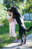 Собака даром, собака в добрые руки фред. Фото 3.