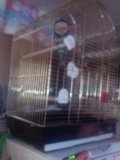 Попугай в большой клетке. Фото 1.
