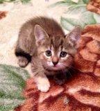 Котёнок в добрые руки. Фото 2.