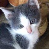 Котята ищут доброго хозяина. Фото 3.