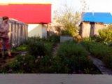 Сад. Фото 3.