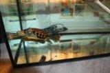 Аквариум с черепахой. Фото 2.