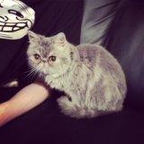 Котик. Фото 1.