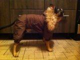 Зимний костюм для собак🐶. Фото 2.