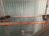 Клетка для большого попугая. Фото 4.