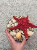 Морская звезда и ракушки. Фото 4.
