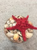 Морская звезда и ракушки. Фото 3.