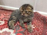Плюшевые котятки. Фото 1.