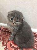 Плюшевые котятки. Фото 3.