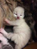 Отдам в дар котят в добрые руки. Фото 3.