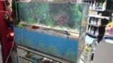 Аквариум речка. Фото 1.