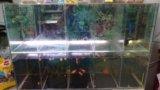 Аквариум речка. Фото 2.