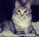 Животные в добрые руки, кошки бесплатно. Фото 4.