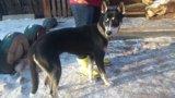 Нужны новые хозяева брошеной в лесу собаке. Фото 2.