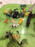 Животные. Фото 2.
