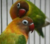 Попугай. Фото 1.