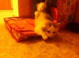 Кошечка, 2-3 месяца. Фото 2.