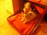Кошечка, 2-3 месяца. Фото 4.
