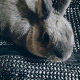 Кролик. Фото 3.