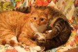 Кот рыжик. Фото 2.