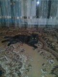 Отдам кота. Фото 1.