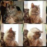 Кошка мелинда. Фото 1.