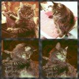 Кошка руслана. Фото 1.
