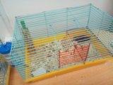 Сатиновые мышки. Фото 1.