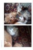 Отдам котят и кошек. Фото 1.