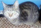 Отдам котят и кошек. Фото 2.