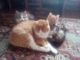 Отдам котят и кошек. Фото 4.