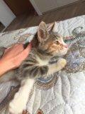 Кошечка в добрые руки. Фото 4.