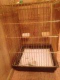 Клетка для крупных попугаев со всеми игрушками. Фото 1.