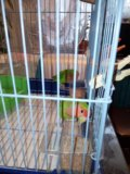 Попугаи. Фото 3.