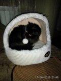 Кошачий домик с игрушкой. Фото 1.