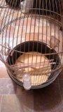 Клетка для попугая ферпласт, б/у. Фото 3.