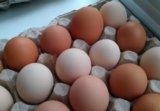 Домашние куриные яйца!. Фото 1.