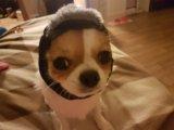 Одежда для собак ( шапка). Фото 2.