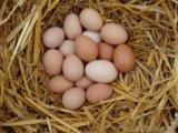 Яйцо домашние куриное перепелиное. Фото 2.